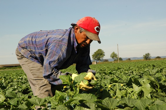 The Eternal Stranger: Ministry with Migrant Farmworkers